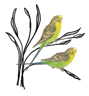 drawing of 2 birds on a branch for With Helene Feuillat Coaching, Training, Facilitation