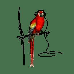 RedParrot-HF